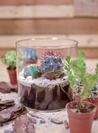 Terárium s kaktusy