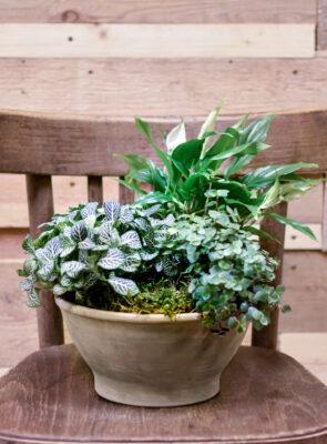 Miska s pokojovými rostlinami